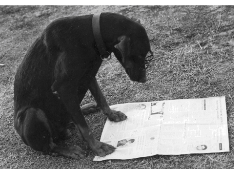 doberman reading newspaper